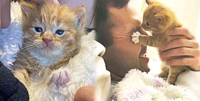 母猫に捨てられた子猫…里親さんのもとで天使級の可愛さ爆発♡