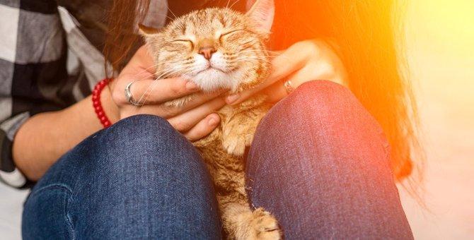 人懐っこい猫の品種は?アンケート結果や育て方のポイントまで