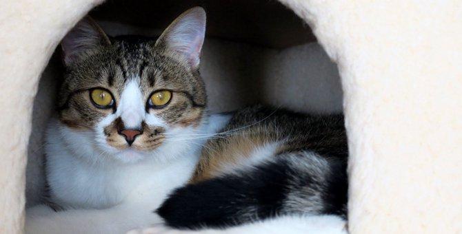 『寂しさを感じている猫』がする仕草4選!愛情が伝わるケアの方法とは?