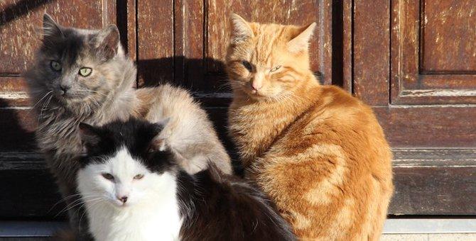 謎が多い『猫の集会』について調べてみたら『猫としての暮らし方』がみえてきた