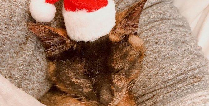今年も猫サンタがやってくる♡おすすめの猫用サンタ服もご紹介♪
