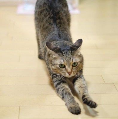 猫から学ぶ『ストレス解消法』4選!にゃんこの暮らしにはヒントがたくさん♪