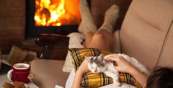 猫は季節によって甘え方が違う!?4つのパターンと接し方