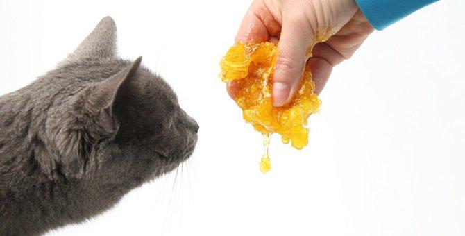 猫にはちみつを与える時の注意点や与え方