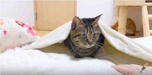 絶対に布団を譲らないと決めた猫ちゃん