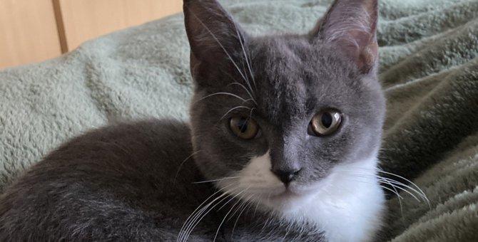 猫が『満足感』を得ることができる飼い主の行動4つ