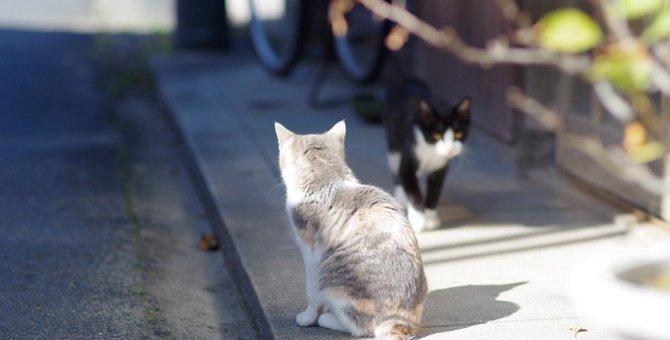 超音波が出る猫よけグッズおすすめランキングベスト5