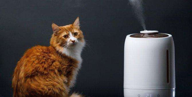 猫も冬場は要注意「乾燥肌」サイン3つと対処法
