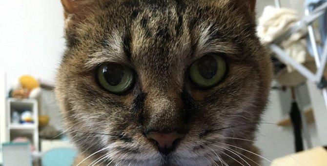 『寿命が長い猫』に共通する食習慣のポイント5つ