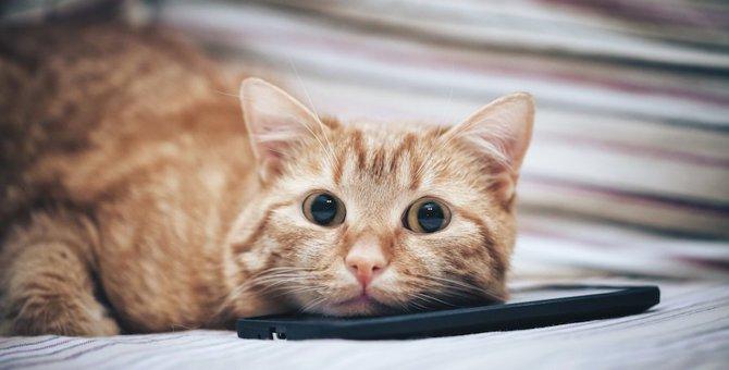 猫のスマホスタンドがゆるかわいい!プレゼントにもおすすめな商品8選