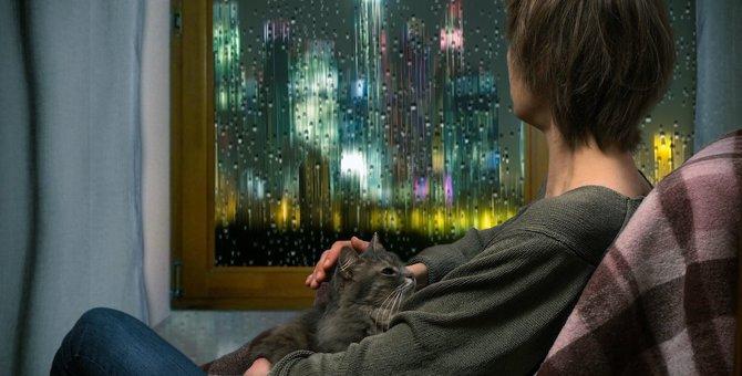 台風のときに猫にしたい気配り5つ