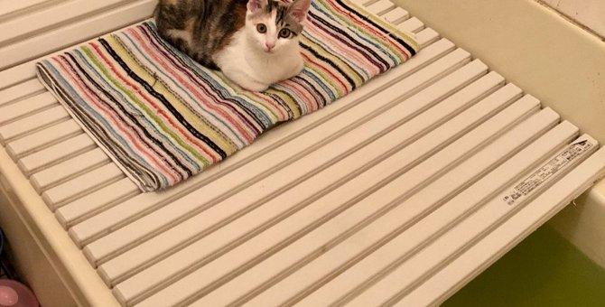 猫をお風呂に慣れさせる方法3選!やるべきではないNG行為まで解説