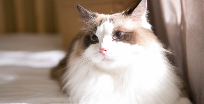猫は気分で『座り方』を変える?シーン別によくする座り方5つとその心理