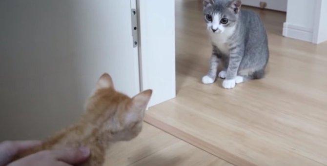 子猫と初対面!その後…先住猫と子猫の様子は?
