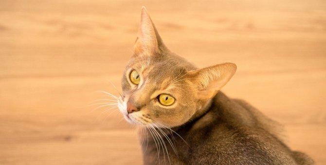 猫も『ねこかぶっている』ことがある?