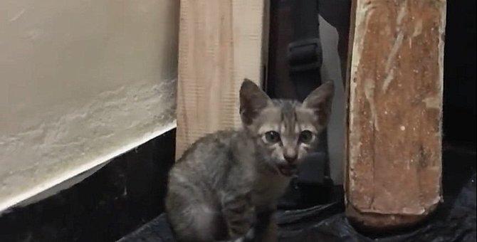 やせ細ったホームレスの子猫。彼に必要な物は…