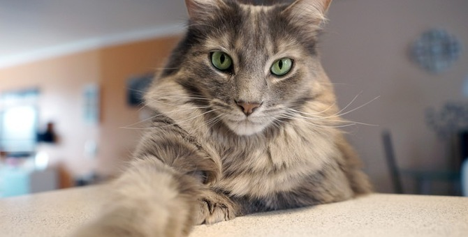 猫がイタズラしない接し方としつけのコツ