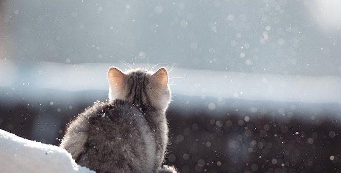 猫が好きな冷たい物7つ!与える時の注意点