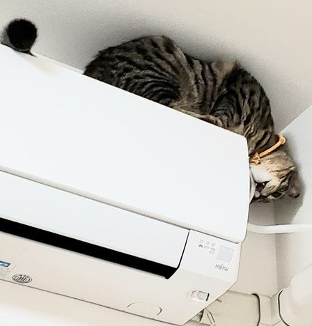 猫がコードをかじる!リスクと防止策3つ