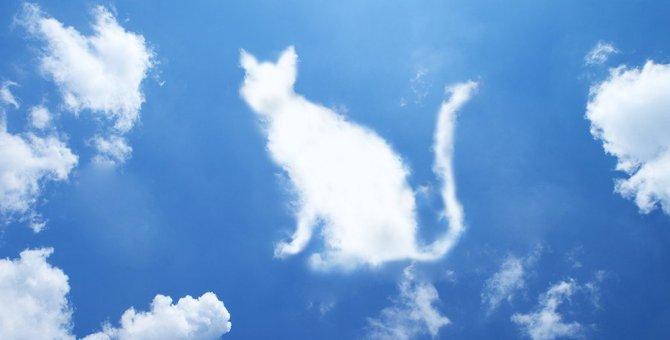 死んだ愛猫が来てくれた?!『不思議な体験』3選
