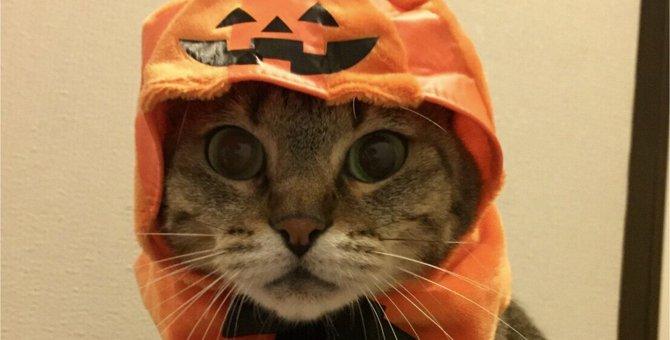 猫も被り物で変身!にゃんにゃんハロウィンを楽しもう♪