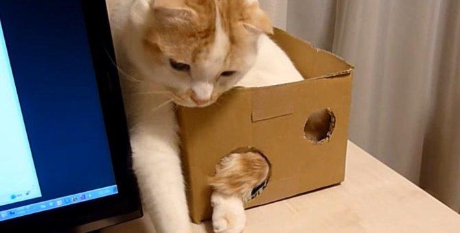 もどかしいけどやめられない!箱に入ったまま遊ぶ猫さん!