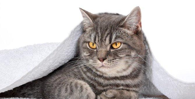 猫の『自律神経失調症』とは?主な症状や原因・対処法を解説!