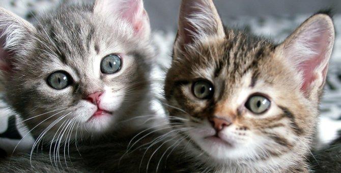 子猫の目やにの原因は?注意すべき病気と正しいケア方法