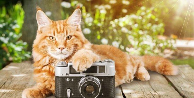 猫をフラッシュ撮影することの危険性