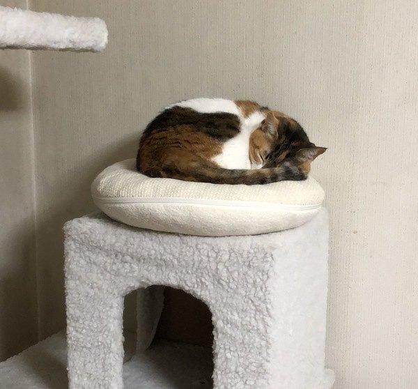 猫がベッドを使ってくれない理由4つ