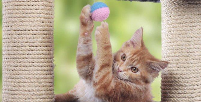 猫の運動会が起きる理由
