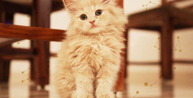 Laylaの12猫占い 8/12~8/18までのあなたと猫ちゃんの運勢