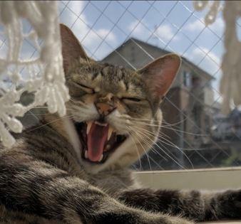 猫が飼い主に文句を言っている時の仕草や行動6つ