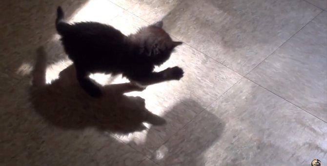 なかなか正体を現さないにゃ…自分の影と戦う子猫ちゃん