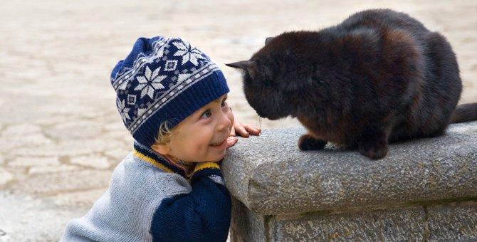 猫と運命的な出会いをしたい!出会うための9つの方法