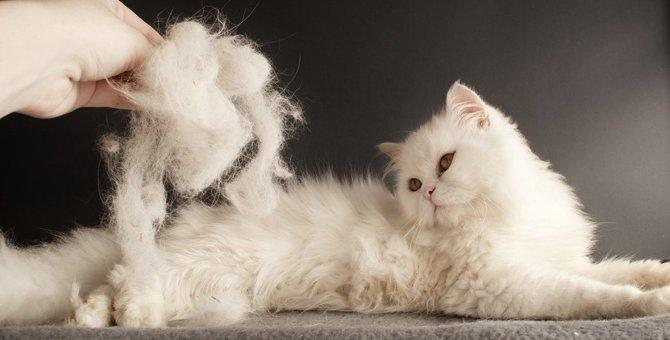 猫の『毛並み』がふわふわにならない5つの原因とケア対策