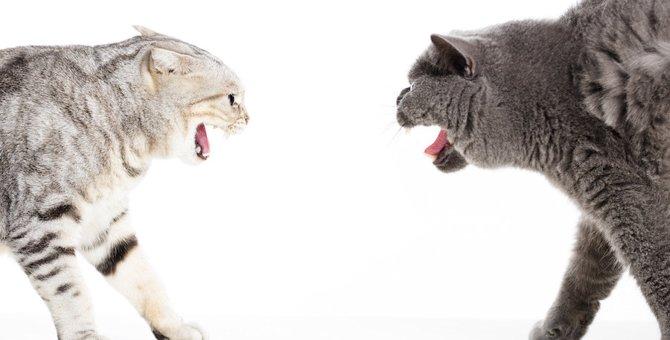 猫が喧嘩をする3つの意味やルール、止め方まで