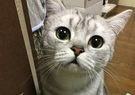 猫の名前における『4つのタブー』