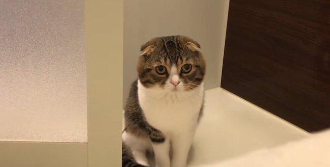 「不思議…」お風呂に入る飼い主さんを見つめる猫さん!