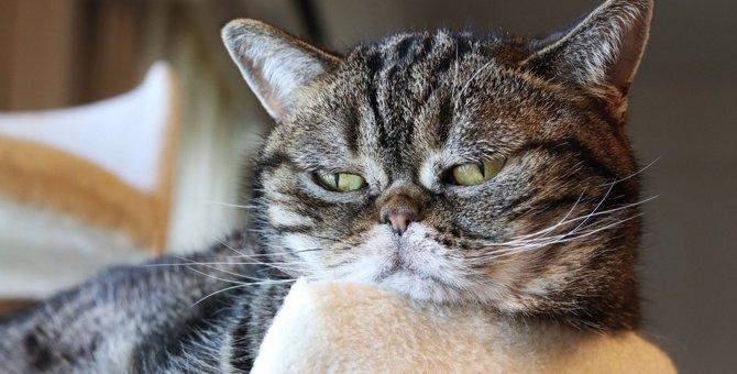 猫が嫌気をさしている『飼い主の無神経な行為』5つ