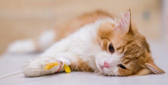 猫の『突然死』に繋がる恐ろしい病気3選!日常生活ですべき予防策とは?