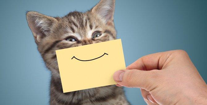 かわいい猫の顔文字まとめ!今、おすすめの厳選45個