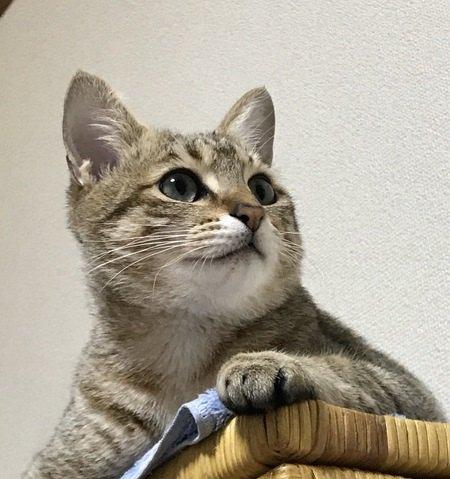 猫が嬉しいときの仕草や行動5つ