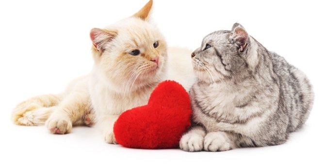 猫の発情期について  時期・周期や特徴とは