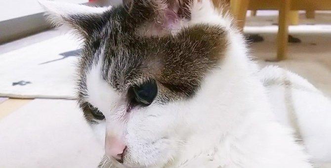 老猫のためのちょっとした気配り5つ