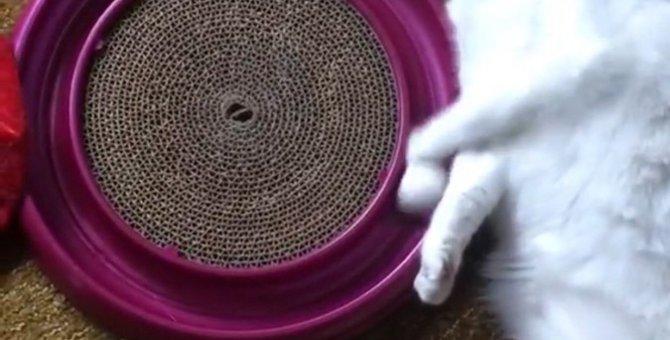 手首のスナップを巧みに使ってボールを回す猫ちゃん
