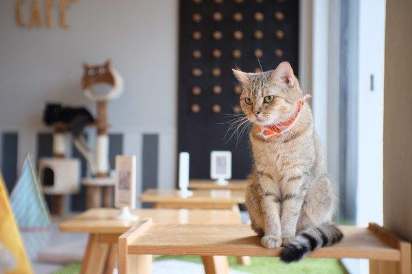 猫カフェの値段の相場は?子猫、保護猫などもいる有名店の値段まとめ