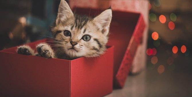 『猫の舌』チョコの特徴とおすすめな理由