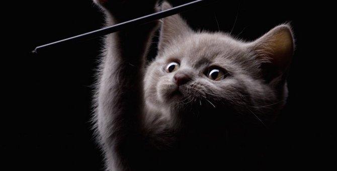 猫が夜中に暴れる原因と6つの対策