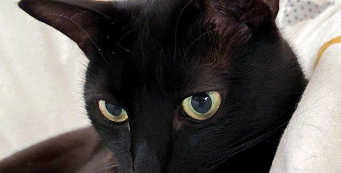 まるでアニメキャラ!?イケメンが過ぎる黒猫さんが話題♡